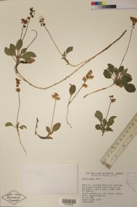 herbarium_specimen
