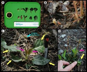 leaf_comparison